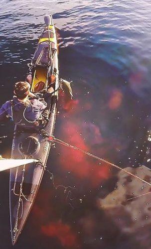 Izando atún de aleta amarilla.